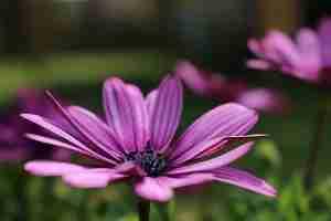 Blume, die Flora Dänemarks